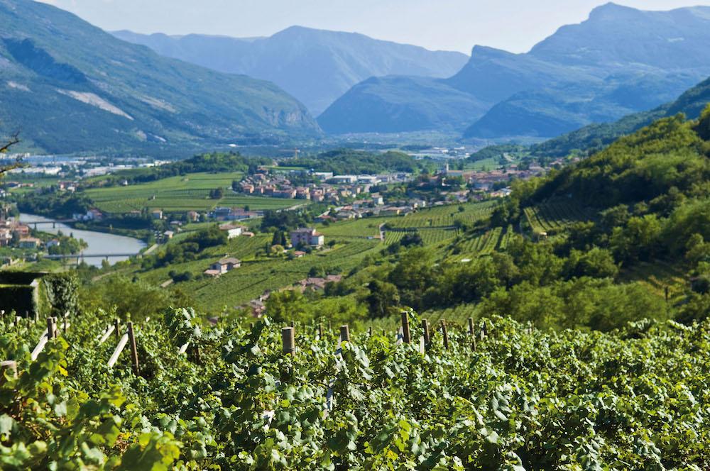 enologia e viticoltura di montagna