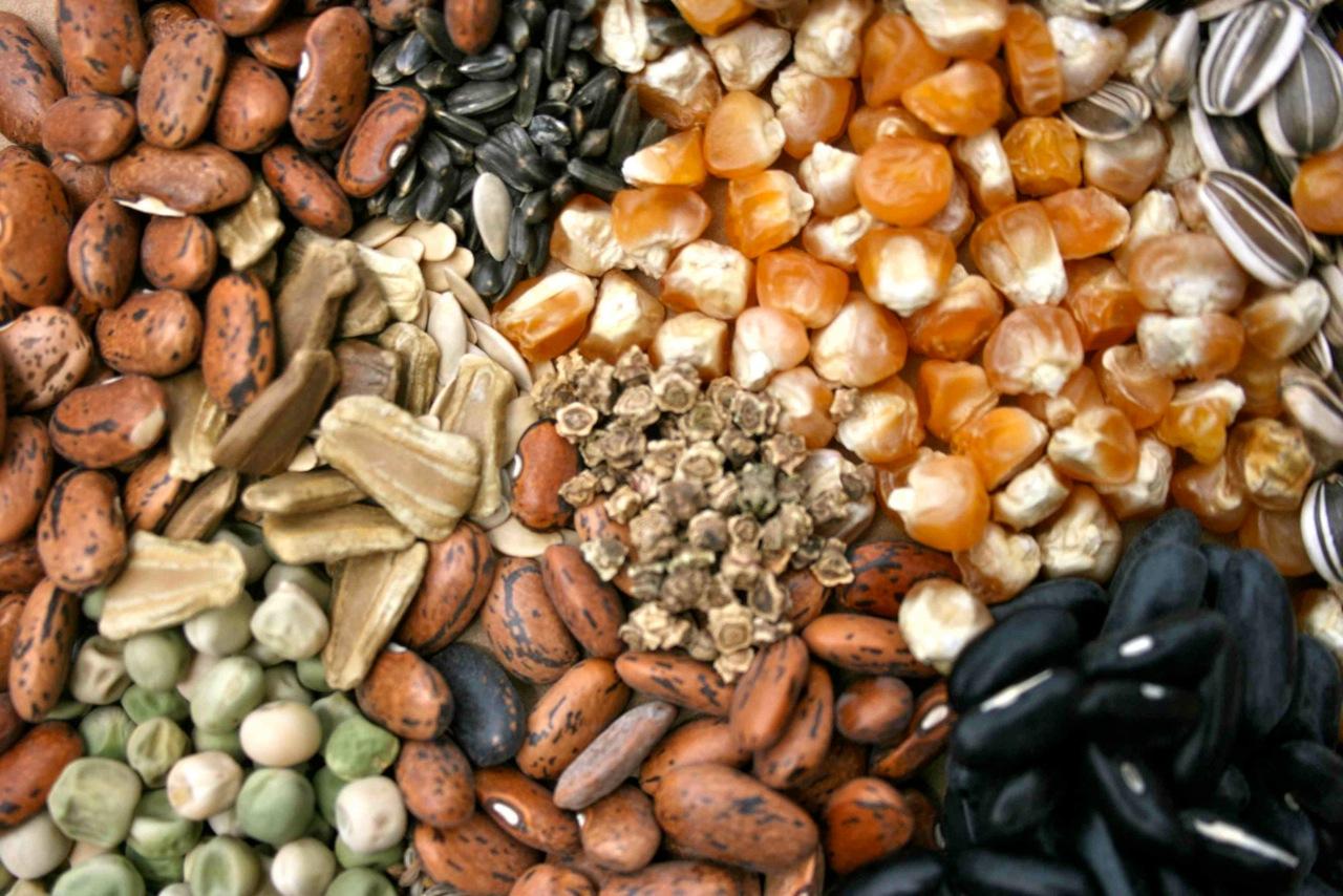 semi, sementi e legumi