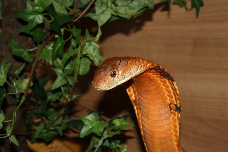 mostra sui serpenti