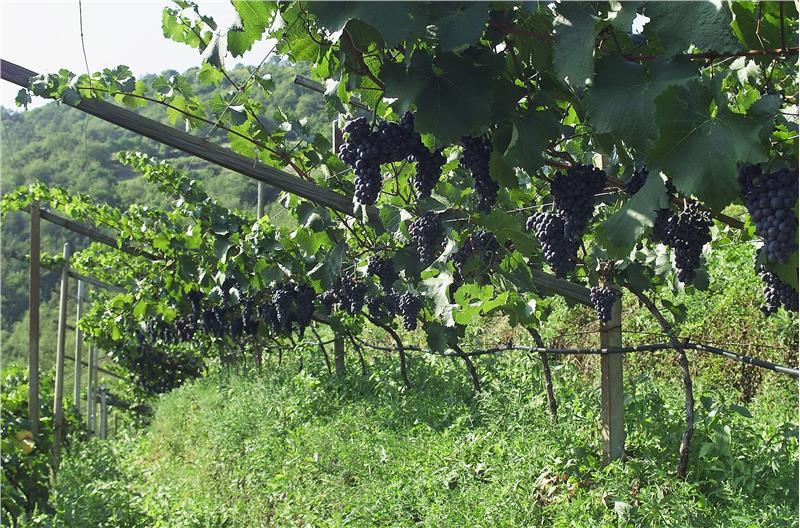 viticoltori Alto Adige