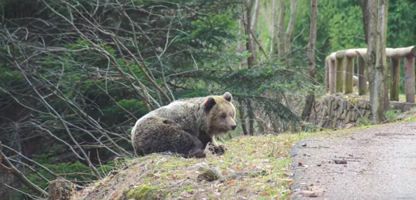incontro orso