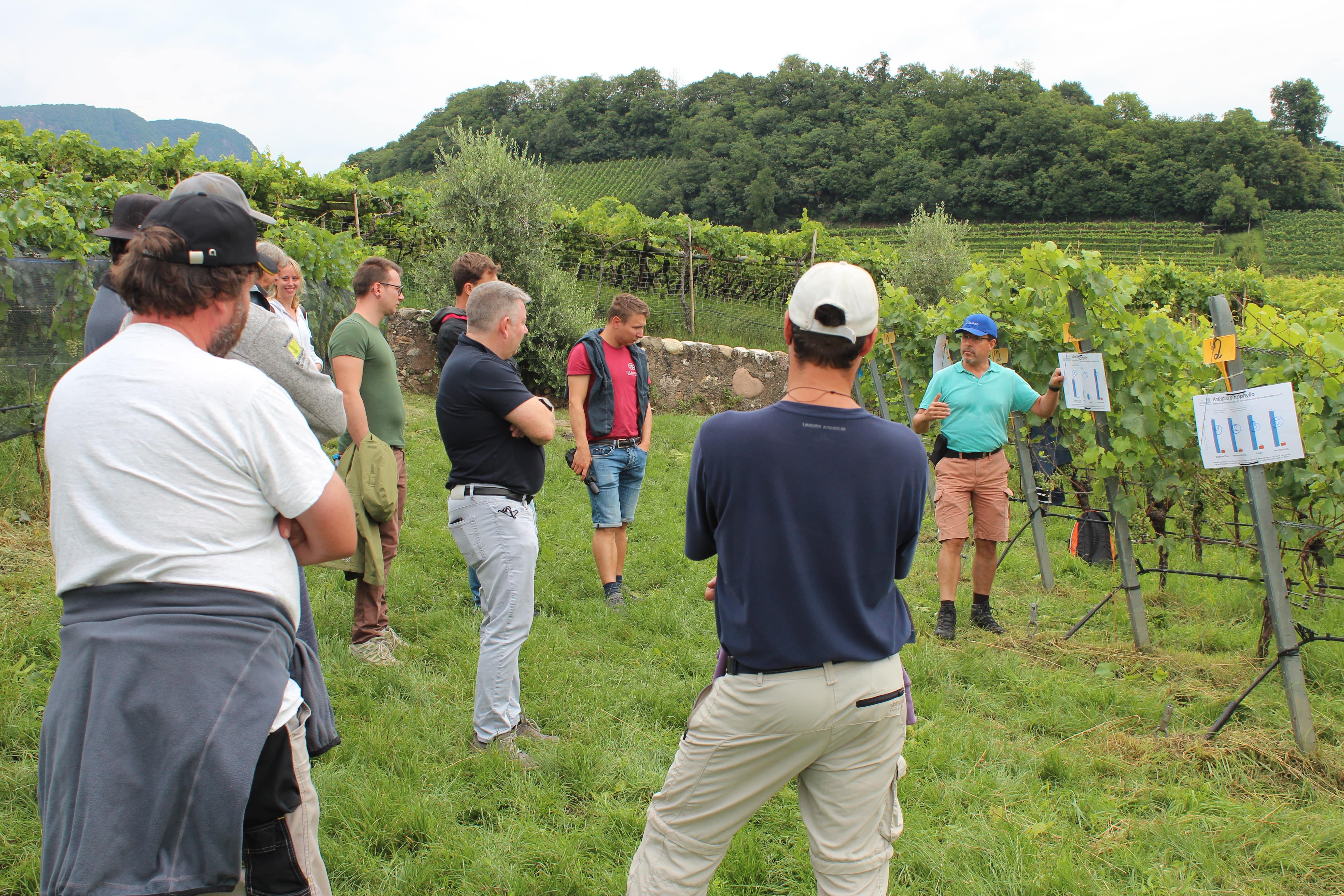 Caldaro prove viticoltura