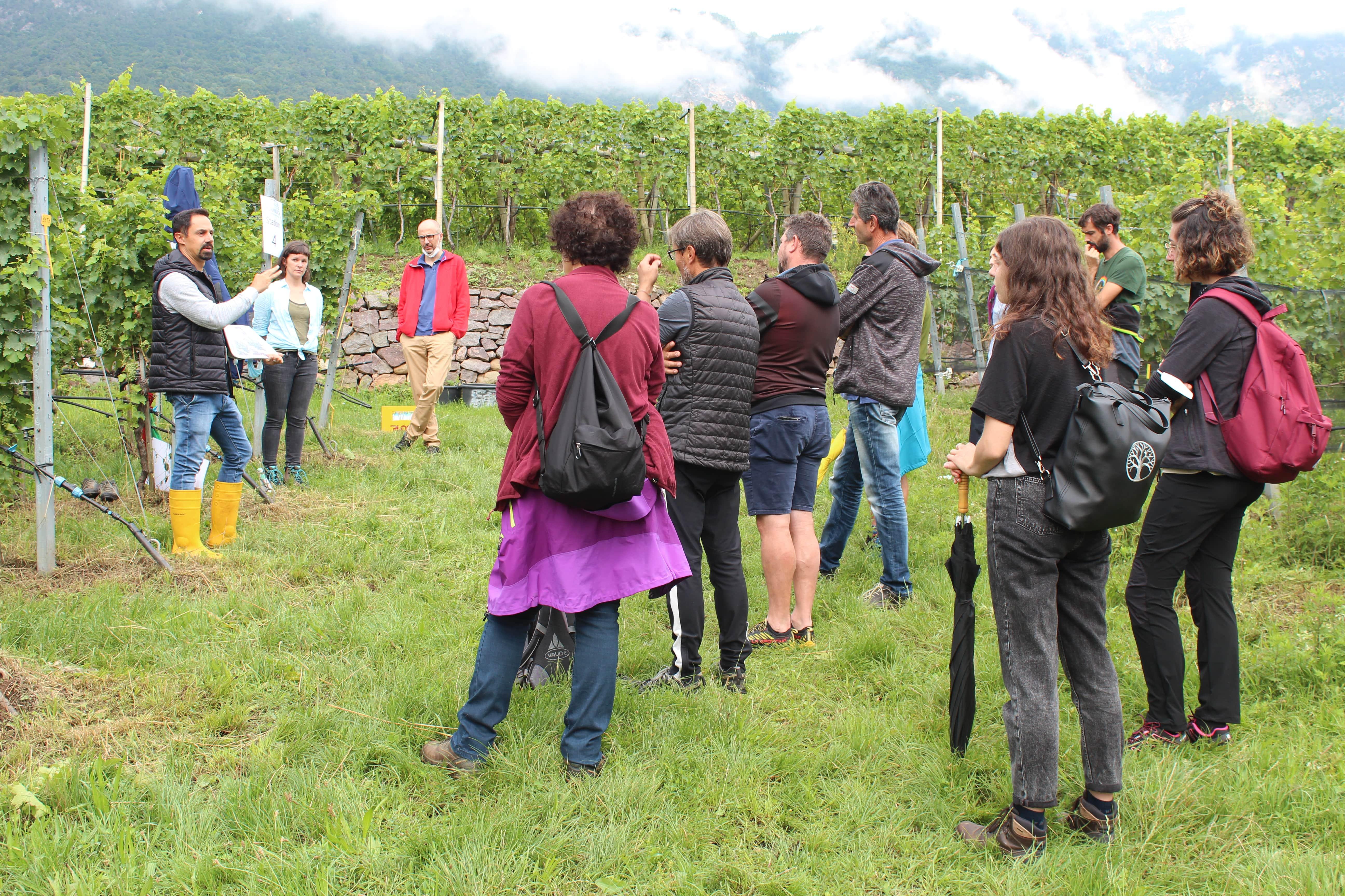prove viticoltura Laimburg